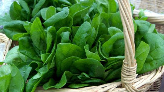 spenót, paraj, spináta, zöld csütörtök, spenót elkészítése