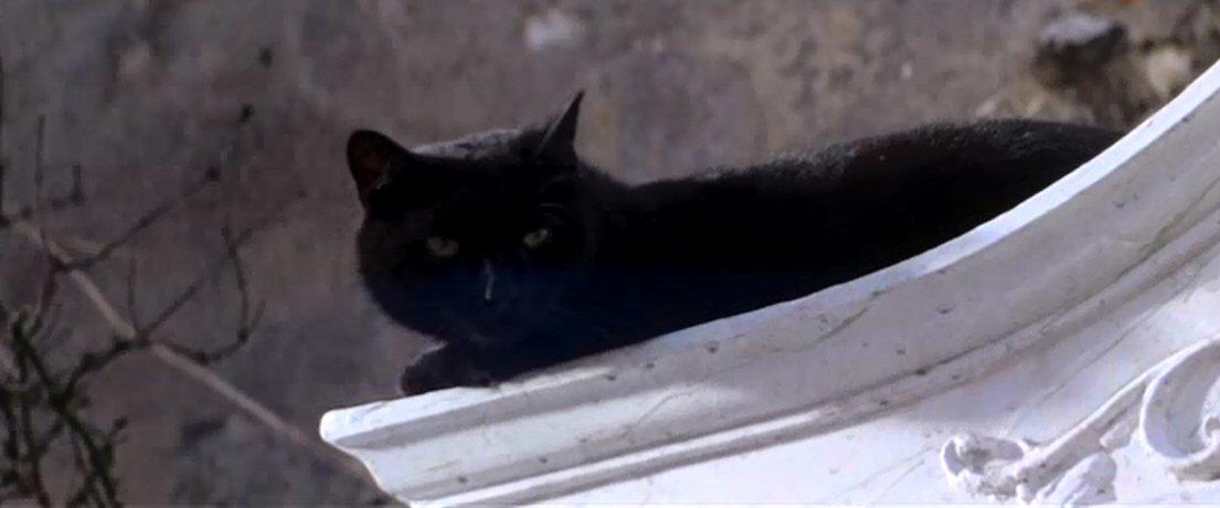 Poe, macska, Ligeia